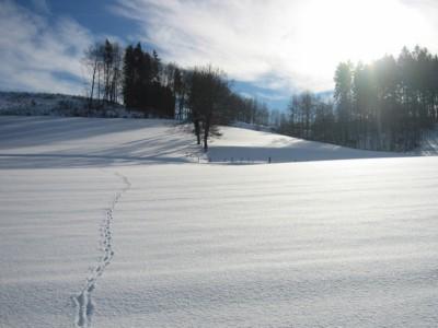 Krynica Sylwester w Krynicy na nartach