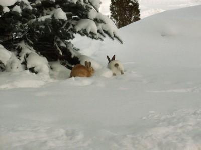 lesko sylwester w lesku na nartach