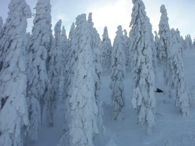 oferty piwniczna sylwester w piwnicznej na nartach