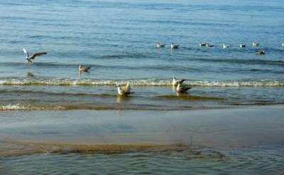 tanie imprezy sylwestrowe sarbinowo sylwester w sarbinowie nad morzem